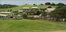 Ace Hi Riding Ranch - Accommodation Mt Buller