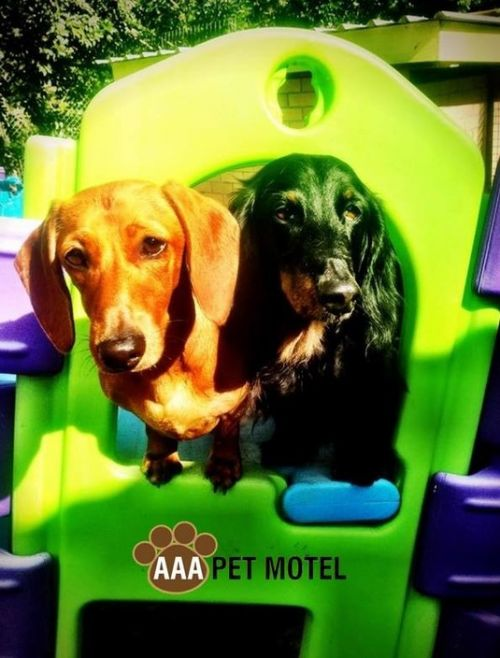 AAA Pet Motel - Accommodation Mt Buller