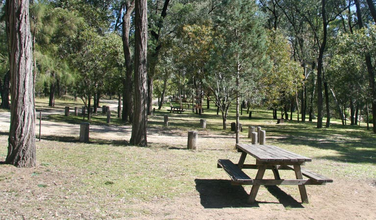 Lemon Tree Flat campground - Accommodation Mt Buller