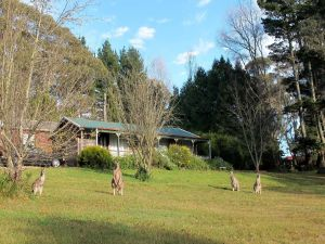 Cedar Lodge Cabins - Accommodation Mt Buller