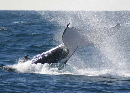 Whale Watching Sydney - Accommodation Mt Buller