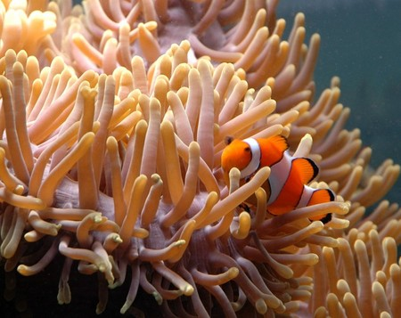 Reef HQ Great Barrier Reef Aquarium - Accommodation Mt Buller