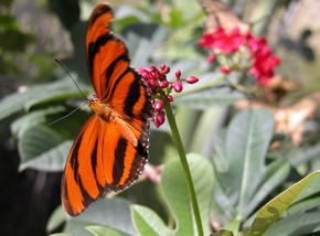 Butterfly Farm - Accommodation Mt Buller