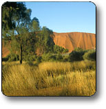 Uluru - Kata Tjuta National Park - Accommodation Mt Buller