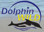 Dolphin Wild - Accommodation Mt Buller