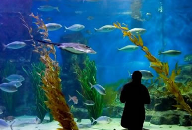 Melbourne Aquarium - Accommodation Mt Buller