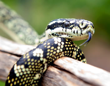 Reptile Encounters - Accommodation Mt Buller