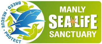 Manly SEA LIFE Sanctuary - Accommodation Mt Buller