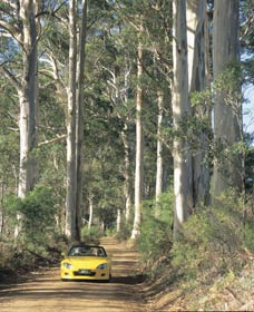 Scotsdale Tourist Drive - Accommodation Mt Buller