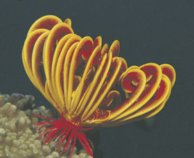 Lighthouse Bay - Accommodation Mt Buller