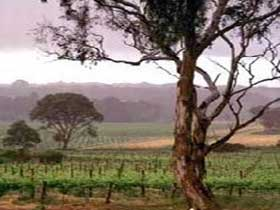 Yangarra Estate Vineyard - Accommodation Mt Buller