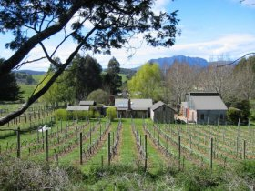 Wilmot Hills Vineyard - Accommodation Mt Buller