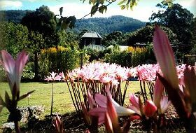Blueberry Cottage Open Gardens - Accommodation Mt Buller