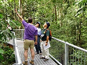 Daintree Discovery Centre - Accommodation Mt Buller
