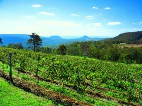 Preston Peak Wines - Accommodation Mt Buller