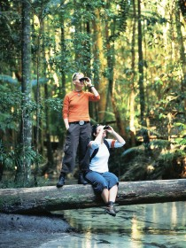 Birdwatching on the Fraser Coast - Accommodation Mt Buller