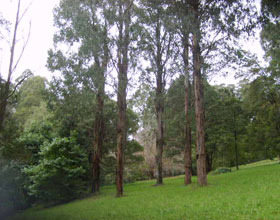 Mount Dandenong Arboretum - Accommodation Mt Buller