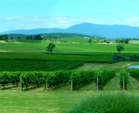 Acacia Ridge Vineyard - Accommodation Mt Buller