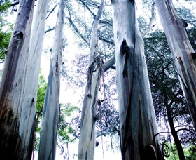 Dandenong Ranges National Park - Accommodation Mt Buller