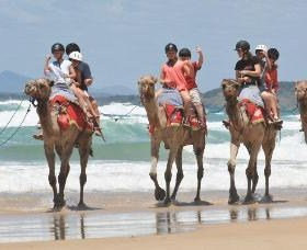 Camel Rides with Coffs Coast Camels - Accommodation Mt Buller