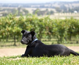 Moothi Estate Vineyard and Cellar Door - Accommodation Mt Buller