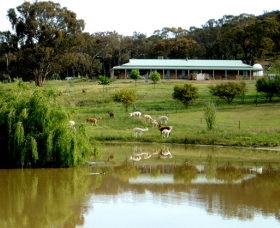 Clearview Alpacas - Accommodation Mt Buller