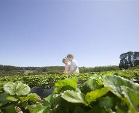 Sunny Ridge Strawberry Farm - Accommodation Mt Buller