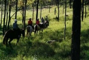 Hunter Valley Horse Riding and Adventures - Accommodation Mt Buller