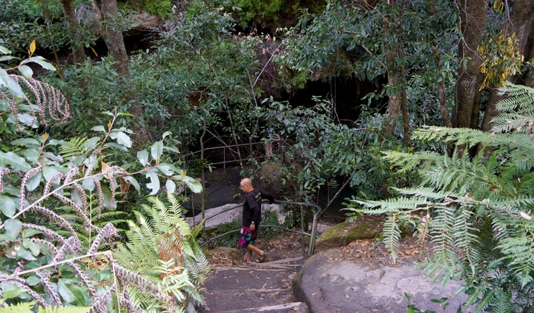 Leura Cascades Fern Bower - Accommodation Mt Buller