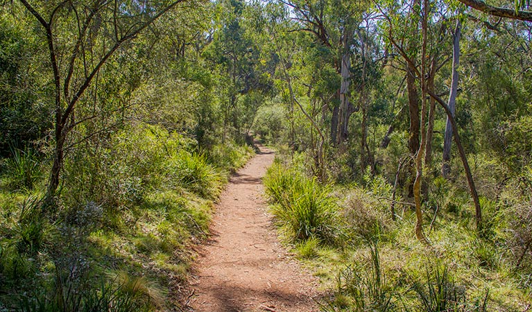 Mares Forest Creek walking track - Accommodation Mt Buller