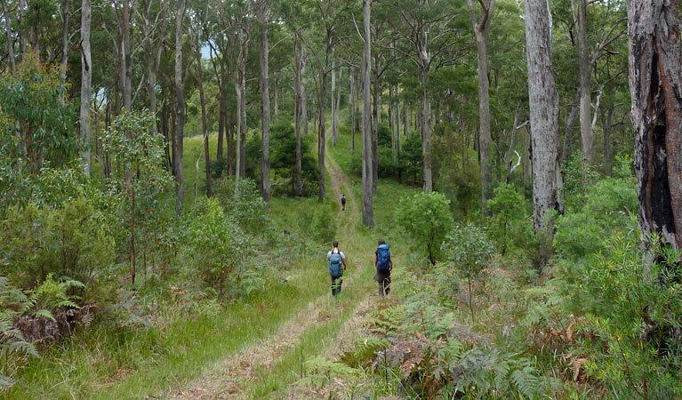 The Green Gully track