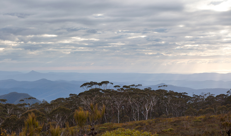 Mount Budawang trail - Accommodation Mt Buller