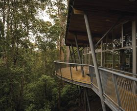Tarkine Forest Adventures - Dismal Swamp - Accommodation Mt Buller