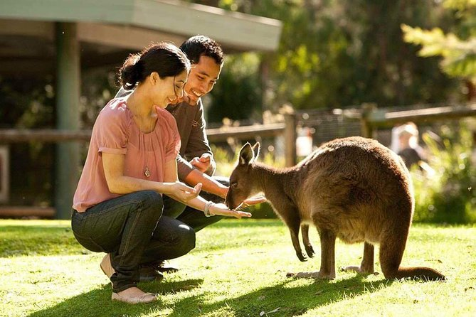 Very Best of Perth Tour - Wildlife Park  City Highlights Tour - Accommodation Mt Buller
