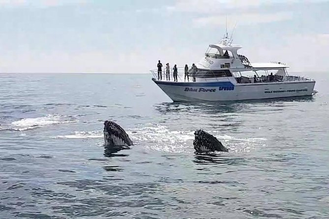 Busselton Whale Watching Eco Tour