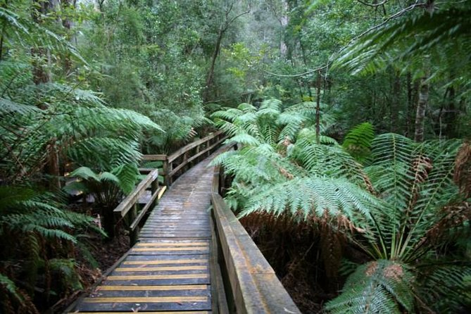 Small-group Hastings Caves and Tahune Forest AirWalk Tour from Hobart - Accommodation Mt Buller