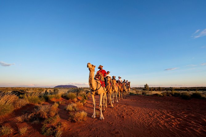 Uluru Camel Express Sunrise or Sunset Tours - Accommodation Mt Buller