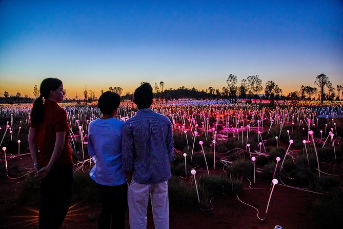 Uluru Field of Light Sunrise Tour - Accommodation Mt Buller