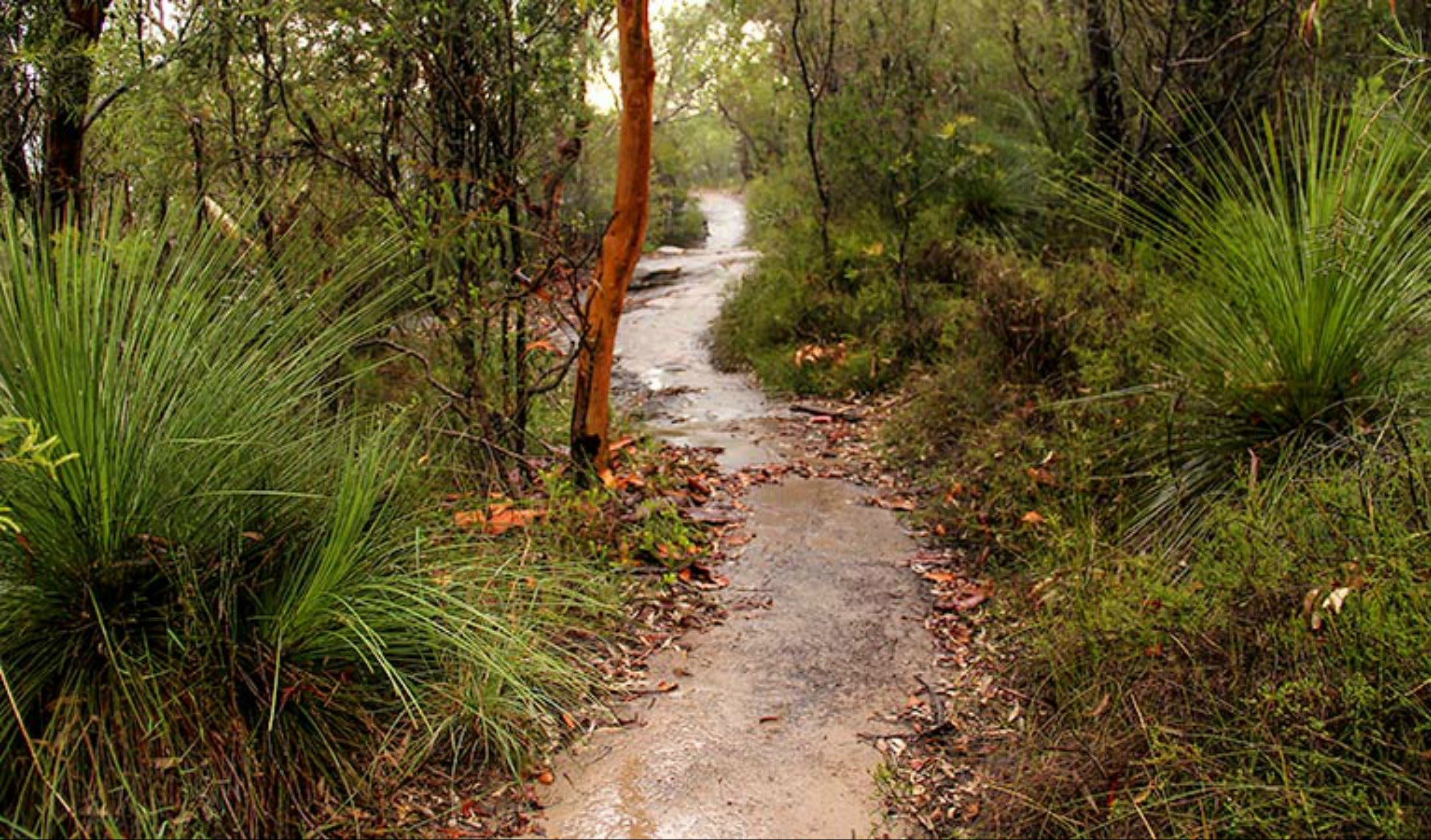 Great North walk - Brisbane Water National Park - Accommodation Mt Buller