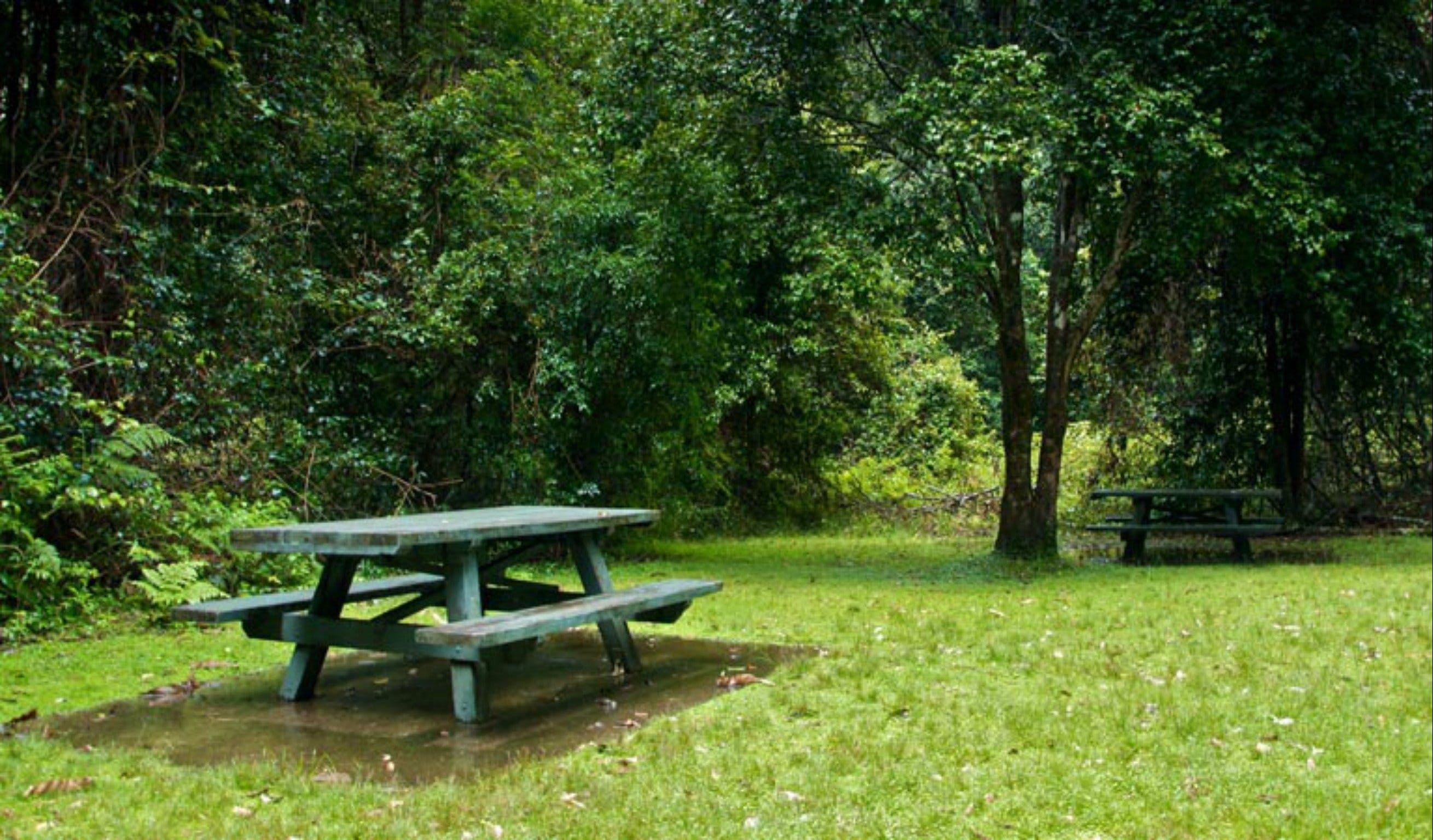 Williams River picnic area - Accommodation Mt Buller