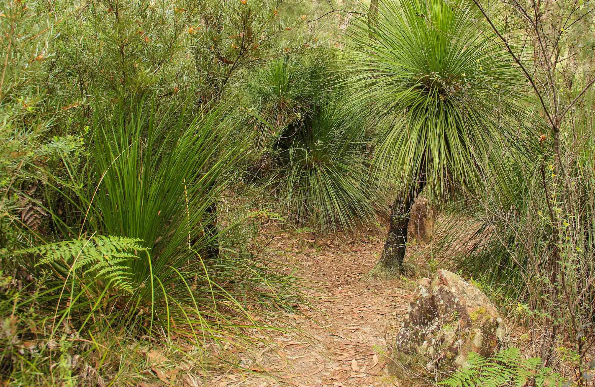 Grass Tree Circuit - Accommodation Mt Buller