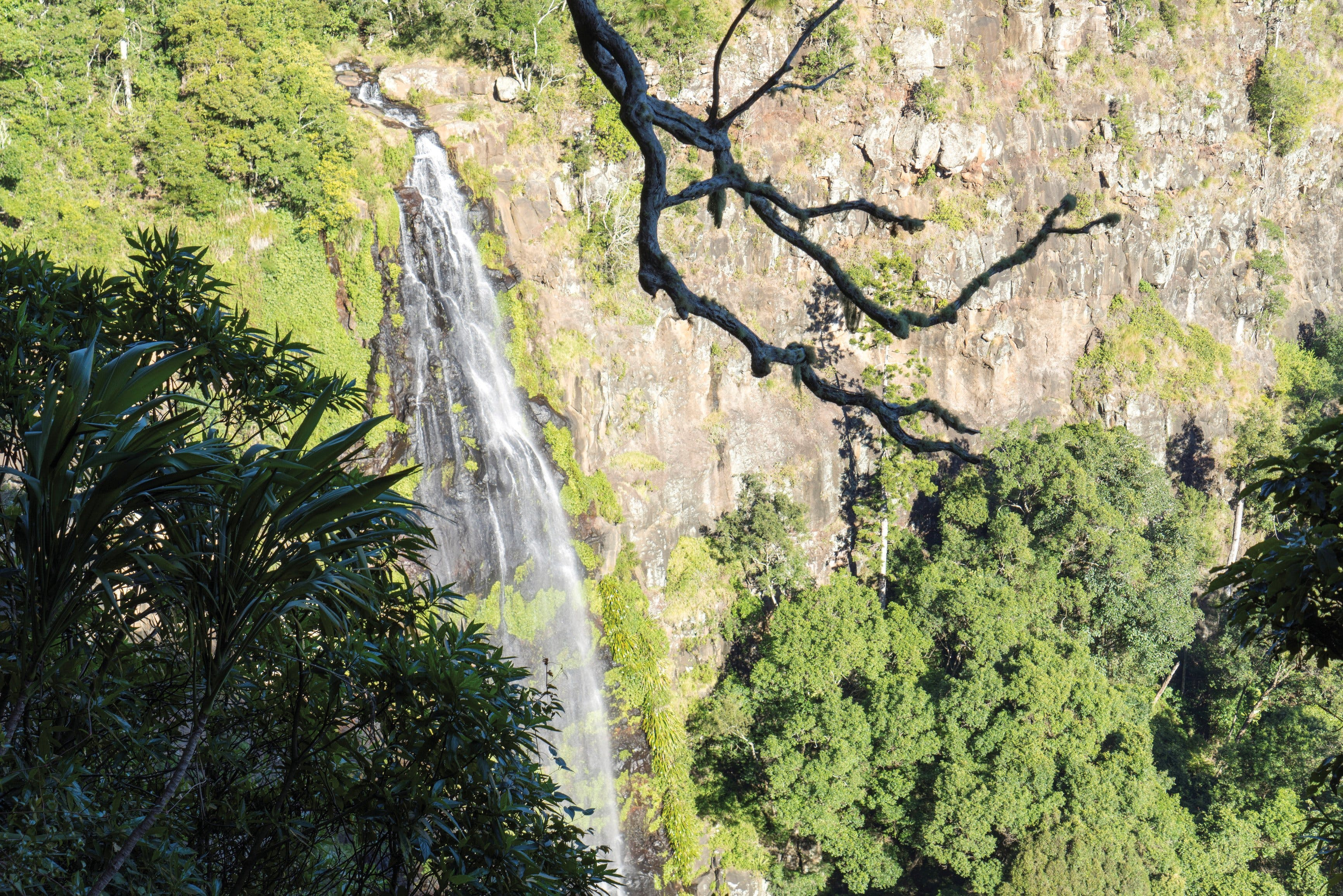 Morans Falls track Lamington National Park - Accommodation Mt Buller