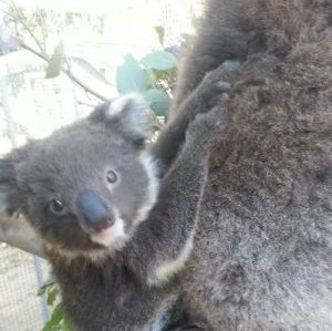 West Oz Wildlife Petting Zoos - Accommodation Mt Buller