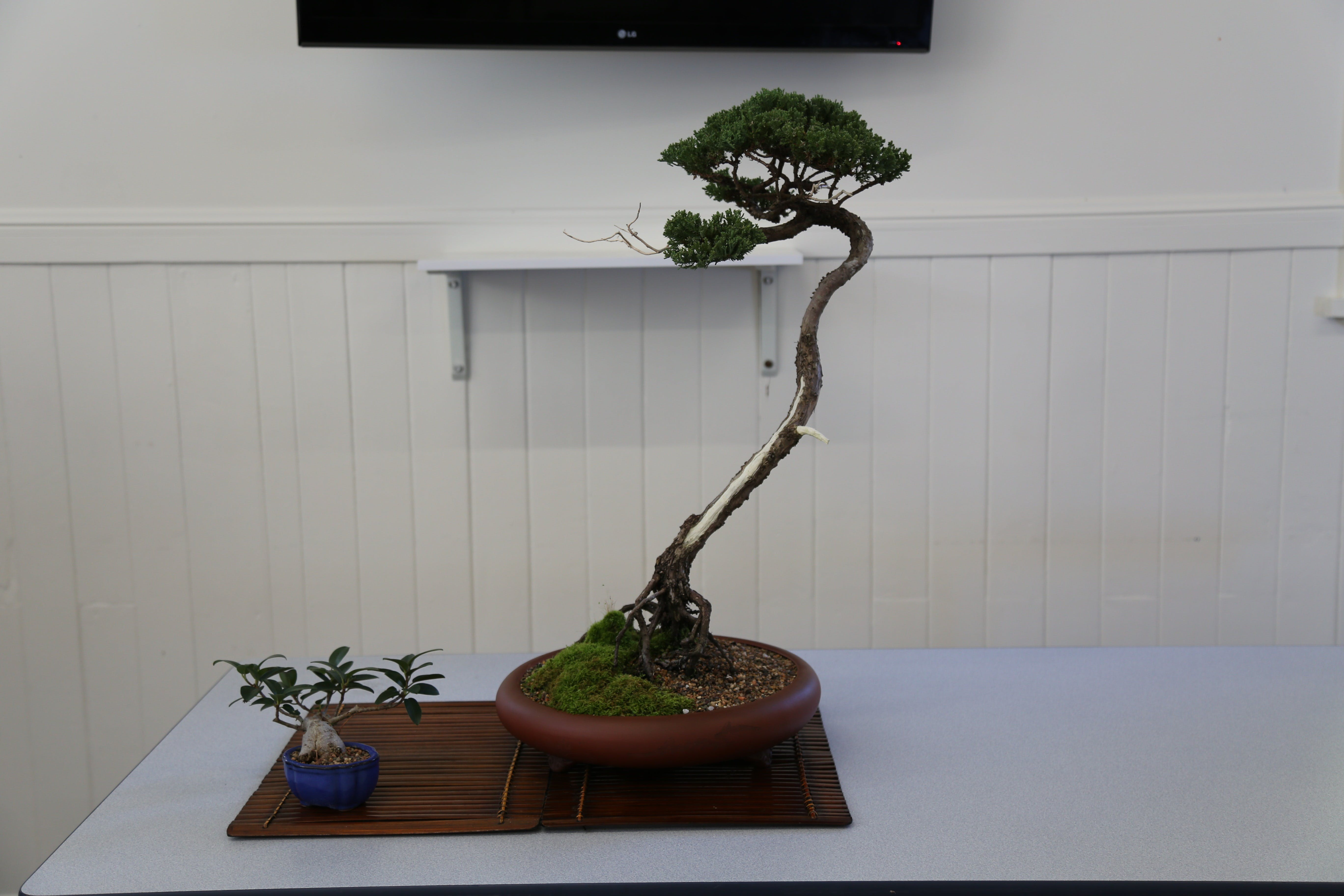 Wauchope Bonsai Workshop Group - Accommodation Mt Buller
