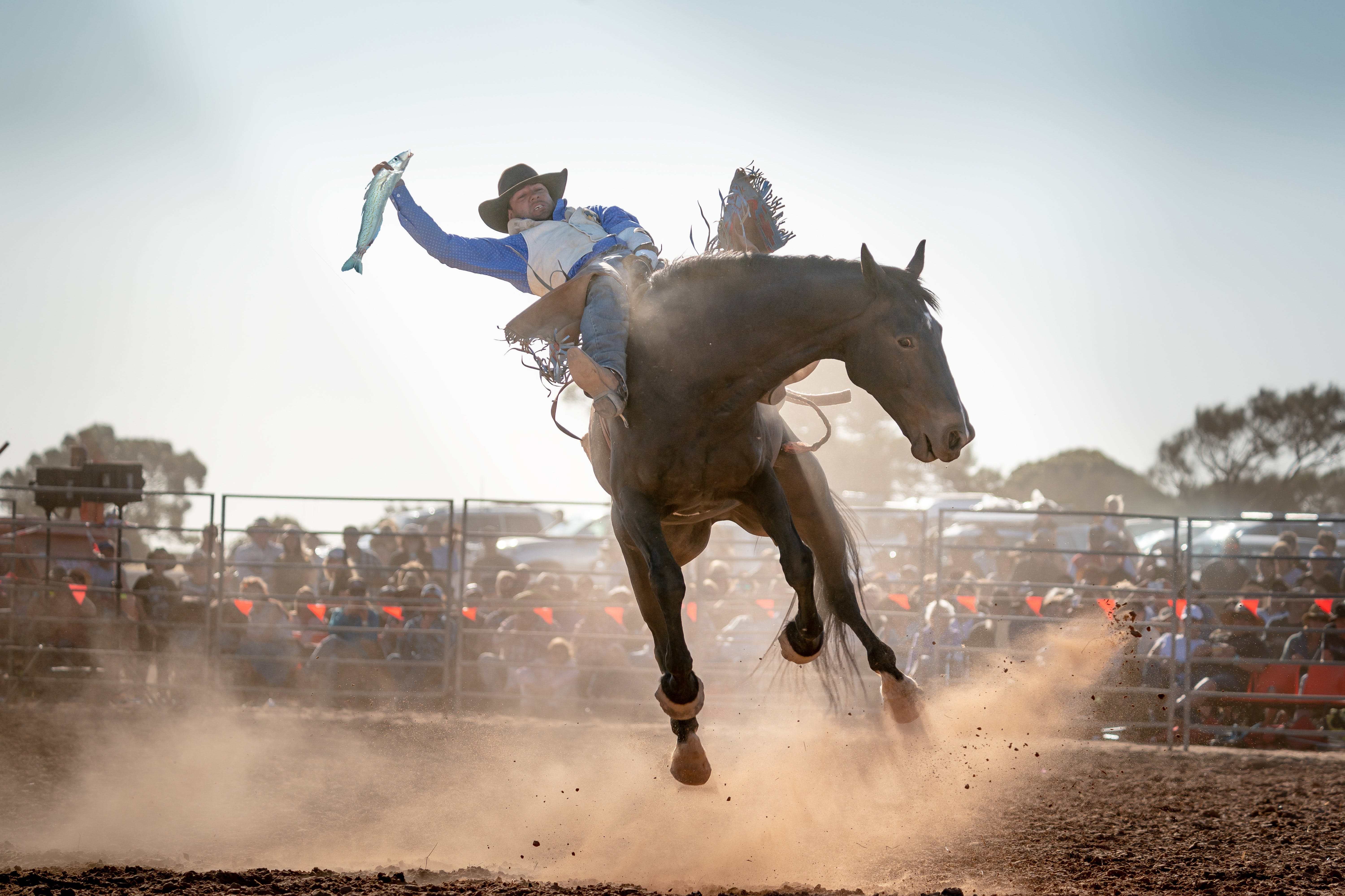 Rodeo by the Sea - Streaky Bay - Accommodation Mt Buller