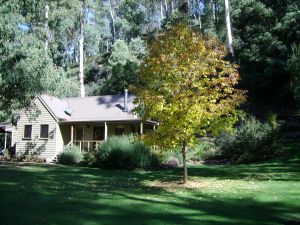 shady brook cottages - Accommodation Mt Buller